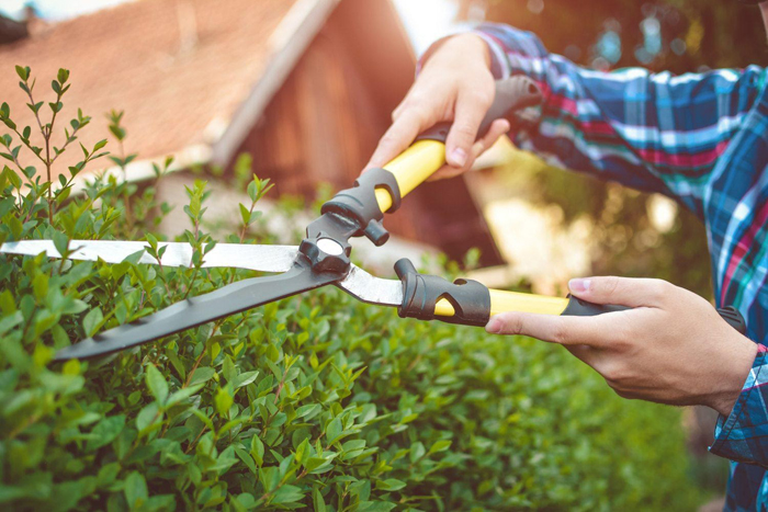 Как выбрать садовые ножницы