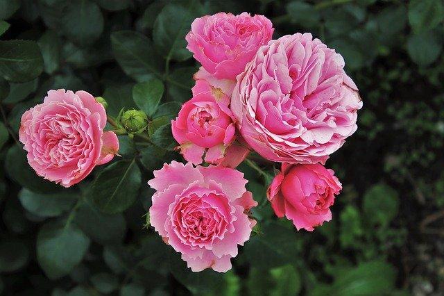 Что посадить с розами