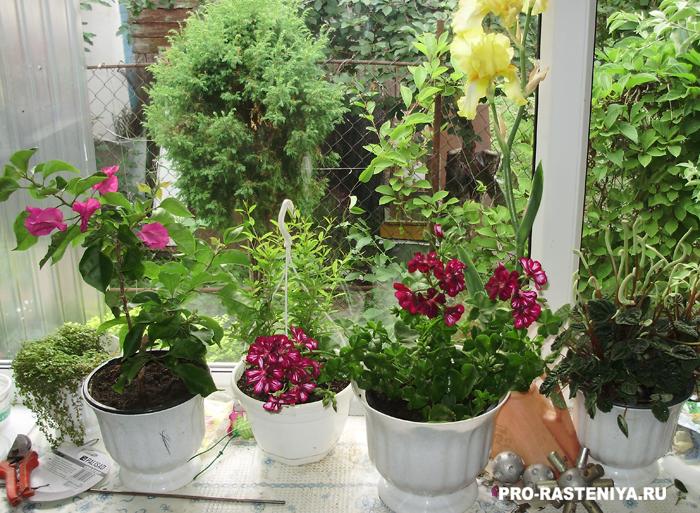Питательные вещества для комнатных растений