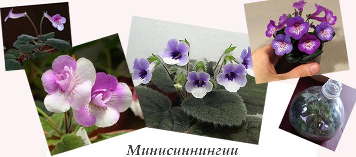 Полив цветов в горшки