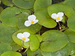 Глубоководные растения