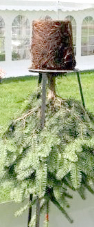 Как выбрать елку в горшке