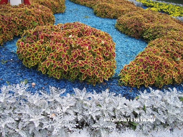 Виды цветников - арабески