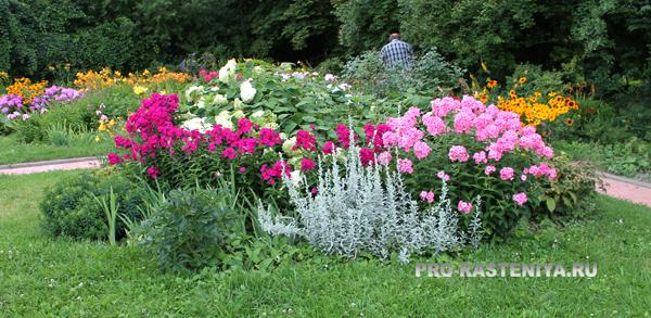 Виды цветников - клумба