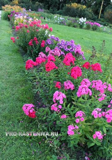 Виды цветников
