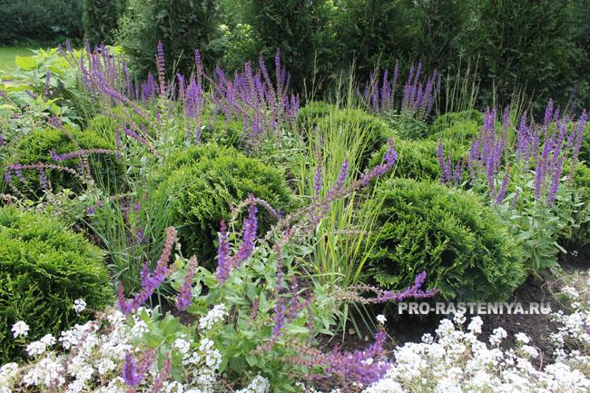 Садовые ансамбли в степном стиле