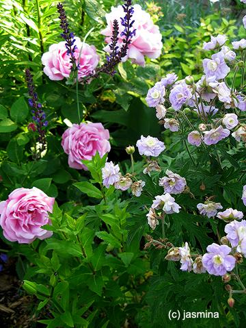 Пейзажные миксбордеры с розами