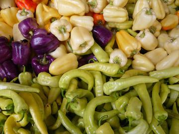 Стручковый перец и его разновидности