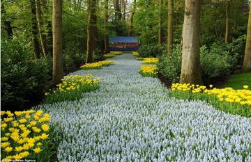В парке цветов Кёкенхоф
