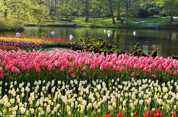 Парк цветов Кекенхов