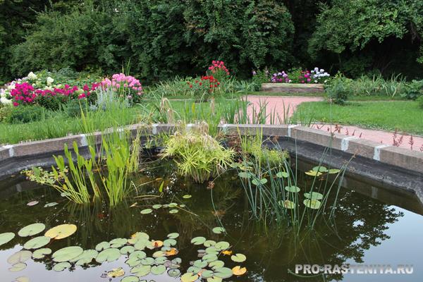 Ботанический сад МГУ на Воробьевых горах - участок показа
