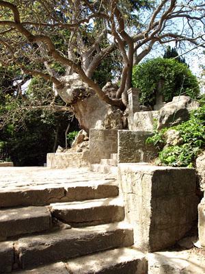 Фисташковое дерево в Никитском саду