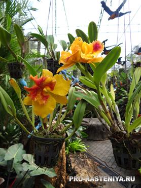Парк Нонг Нуч, орхидеи