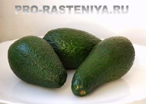 Как выбрать почистить приготовить авокадо и рецепт гуакамоле соуса из авокадо