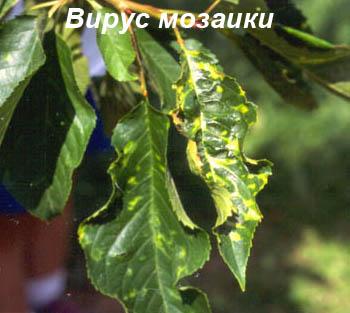 Мозаика черешни