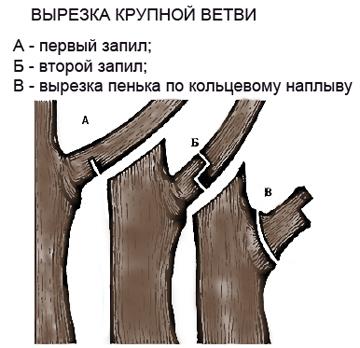 Удаление крупных ветвей