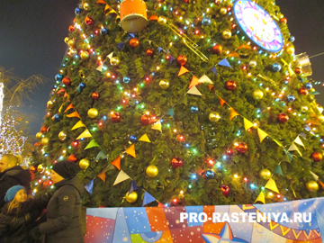 Русское Рождество. Почему Рождество празднуют 7 января